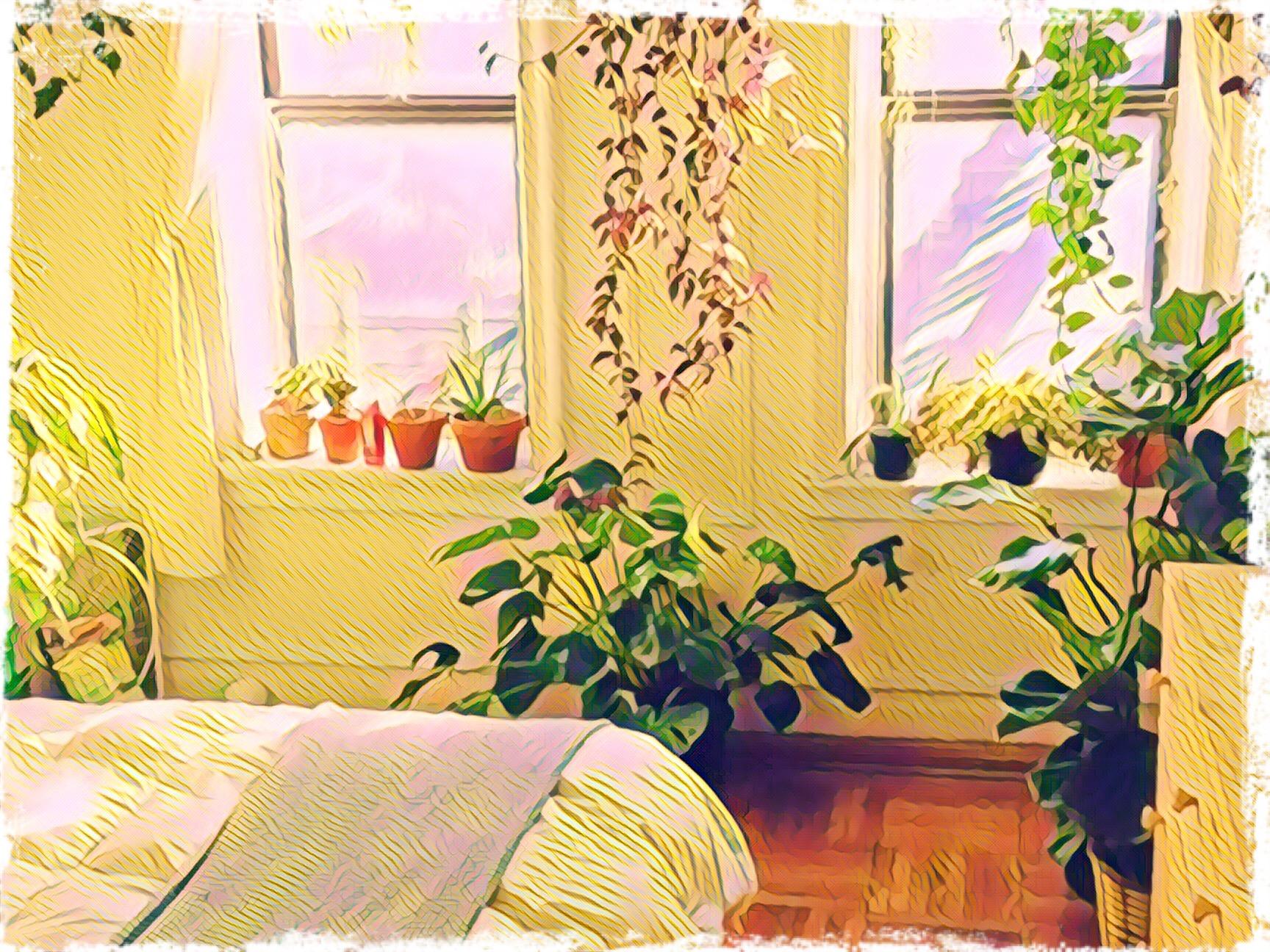 Le piante che si possono tenere in camera da letto per favorire il sonno michele il giardiniere - Piante per camera da letto ...